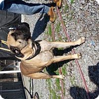 Adopt A Pet :: Gypsy - Chambersburg, PA