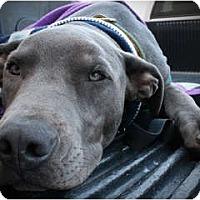 Adopt A Pet :: Rocky - Bakersfield, CA