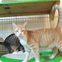 Adopt A Pet :: Simon - Catasauqua, PA