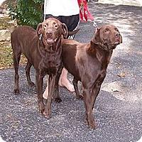 Adopt A Pet :: Cocoa - Normandy, TN