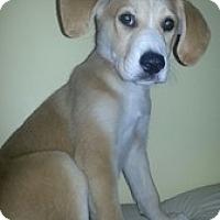 Adopt A Pet :: Baby Simon - Marlton, NJ