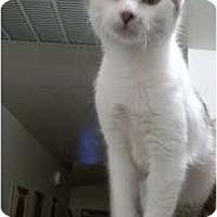 Adopt A Pet :: Sunny - Modesto, CA