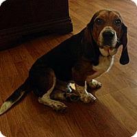 Adopt A Pet :: Merle Haggard - Marietta, GA