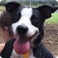 Adopt A Pet :: Roscoe - Wimberley, TX