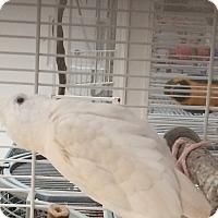 Adopt A Pet :: Frosty & Alby - Punta Gorda, FL