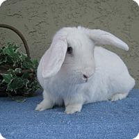 Adopt A Pet :: Sassy - Bonita, CA