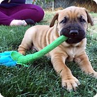 Adopt A Pet :: Peeta - La Quinta, CA