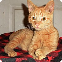 Adopt A Pet :: George - Fairmont, WV