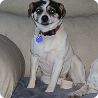 Adopt A Pet :: Penny - Apache Junction, AZ