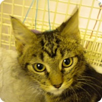 Adopt A Pet :: Morgan - Bridgeton, MO
