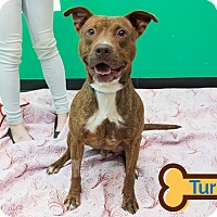 Adopt A Pet :: TURBO - Franklin, NC