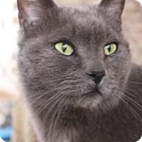 Adopt A Pet :: Bobby Blue - Tucson, AZ