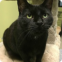 Adopt A Pet :: Binx - Oak Park, IL