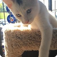 Adopt A Pet :: Mo - Adoption Pending - Horsham, PA