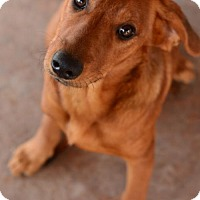 Adopt A Pet :: Douglas - tucson, AZ