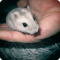 Adopt A Pet :: Anna - Bensalem, PA