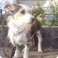 Adopt A Pet :: Vida - West Chicago, IL