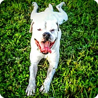 Adopt A Pet :: Whitey - Miami, FL