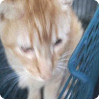 Adopt A Pet :: OSCAR - San Antonio, TX