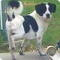 Adopt A Pet :: Hiatt - Aiken, SC