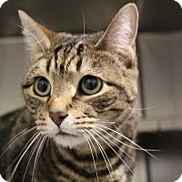 Adopt A Pet :: Tito - Sarasota, FL