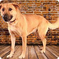 Adopt A Pet :: Sage - Pegram, TN