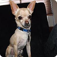 Adopt A Pet :: Gill  3 Years - C/S & Denver Metro, CO