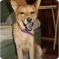Adopt A Pet :: Dublin - Scottsdale, AZ