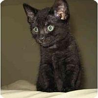 Adopt A Pet :: Pip - Davis, CA