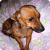Adopt A Pet :: Sunny - Glendale, AZ