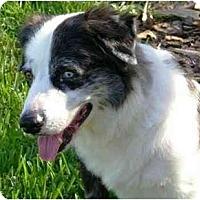 Adopt A Pet :: Shia - Orlando, FL
