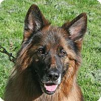 Adopt A Pet :: CUTIE (QT) - Nampa, ID