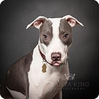 Adopt A Pet :: Louise - Pitt Meadows, BC