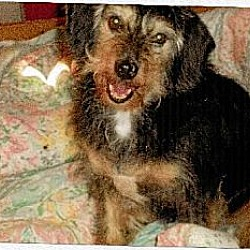 Photo 3 - Terrier (Unknown Type, Medium) Mix Dog for adoption in Homer, New York - Beau
