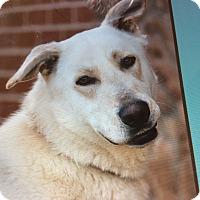 Adopt A Pet :: MARCO VON MARLOW - Los Angeles, CA