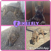 Adopt A Pet :: KImberly meet me 4/15 - Manchester, CT