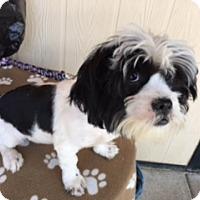 Adopt A Pet :: MARIKO - Elk Grove, CA