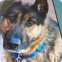 Adopt A Pet :: DUNBAR VON DUNAJ - Los Angeles, CA