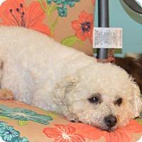 Adopt A Pet :: Kim - Prole, IA
