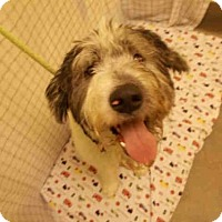 Adopt A Pet :: TWO-FACE - Upper Marlboro, MD
