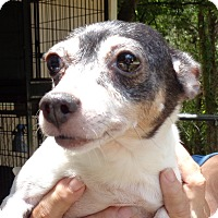 Adopt A Pet :: Angel - Crump, TN