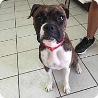 Adopt A Pet :: Nala - Alameda, CA