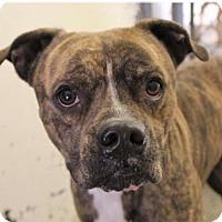 Adopt A Pet :: Cola - Red Bluff, CA