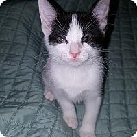 Adopt A Pet :: Mallory - Tampa, FL
