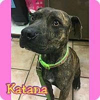 Adopt A Pet :: Katana - Mesa, AZ