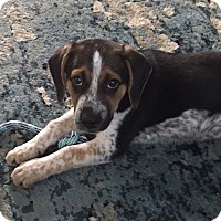 Adopt A Pet :: Benny - Lima, PA