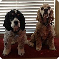 Adopt A Pet :: Corky & Peanut--a Pair - Toluca Lake, CA