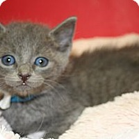 Adopt A Pet :: MARTIN - SILVER SPRING, MD