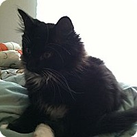Adopt A Pet :: Squrit - Monroe, GA