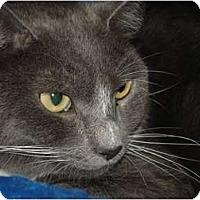 Adopt A Pet :: Susie - Chesapeake, VA